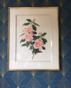 Ancienne gravure botanique  -  La maison