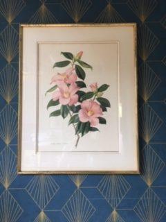 Gravure botanique Reproduction botanique de gravure ancienne