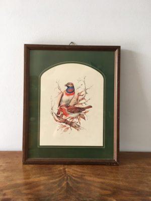 Cadre motif oiseaux